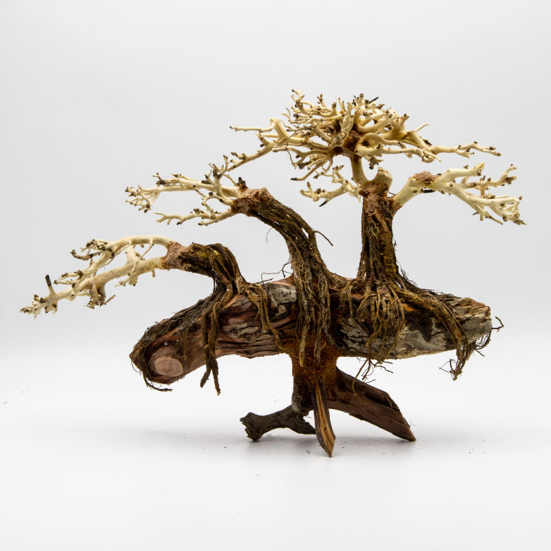 Bonsai Driftwood Aquarium -Minifiss